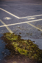 mossroads crossroads (I AM JAMIE KING) Tags: signs nature lines tarmac yellow moss dock safety manmade lichen hull asphalt crossroads converging abp
