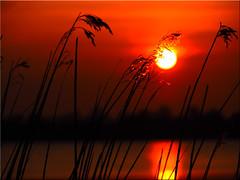Sunset Today (Ostseetroll) Tags: sunset water geotagged deutschland wasser sonnenuntergang deu schleswigholstein scharbeutz pönitzamsee geo:lat=5403159958 geo:lon=1070232701