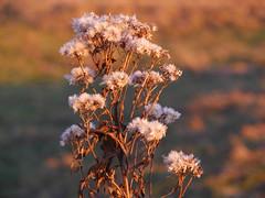 (blogspfastatt (+3.000.000 views)) Tags: autumn light fall automne season lumire herbst saison pfastatt blogspfastatt