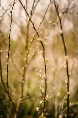 newbees.. (Lumins) Tags: light plant 35mm garden licht spring dof shine bokeh sony pflanze frhling knospe bokeeh