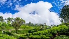 Dambetenne Tea Plantation (3) - Haputale, Sri Lanka.jpg (SWTRIPS) Tags: green landscape tea seat roadtrip sri lanka plantation srilanka teaplantation liptons liptonsseat swtrips