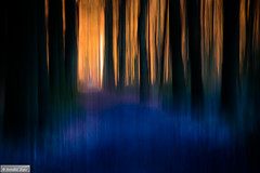 My Magical Forest (Anneke Jager) Tags: trees abstract tree forest bomen topf50 mood moody magic boom dreamy icm droom dromen magisch intentionalcameramovement annekejager