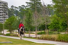 304:365 Urban Cowboy (Woodlands Photog) Tags: urban horse woodlands texas guard security mounted patrol