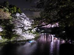 Chidorigafuchi I (Douguerreotype) Tags: city pink flowers urban reflection tree water japan night dark cherry lights tokyo boat blossom cherryblossom sakura