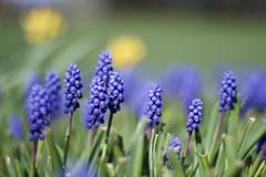 Blmchen (stephanarp339) Tags: flower spring balticsea ostsee fehmarn frhling frhjahr