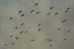 March Birds (blackburdtx) Tags: birds texas wildlife migrate