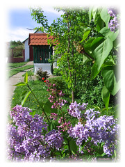 Spring comes... (clevernails) Tags: flower love composition garden spring well lilac romantic stillife