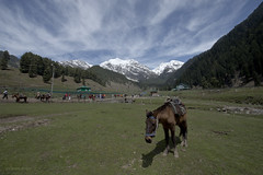 Aru Valley (gurpreet_singh.) Tags: horse india snow mountains grass heaven valley kashmir jk clad aru patnitop