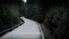 Destination Unknown (ali0140) Tags: life trees canon landscape path journey unknown boardwalk destination haunting t3i