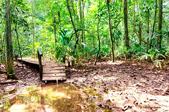 Entrance (Fabienne G) Tags: trees green landscape rainforest costarica mud vert paysage arbre fort tortuguero boue tropicale