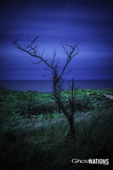 The Wine Dark Sea (Ghost Of Nations Photography And Digital Art) Tags: blue tree beach grass dark gloomy gothic neogothic liminal disquiet newgothic unsetting ghostofnations ghostofnationsphotography