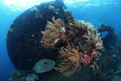 Wreck (Randi Ang) Tags: bali canon indonesia photography eos ship underwater angle wide dive scuba diving fisheye ang wreck 15mm randi 6d javanese amed