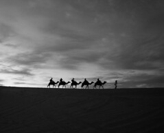 DSC00757 (jygoh92) Tags: africa camp sky blackandwhite cloud sun white black sahara monochrome animals silhouette clouds sand desert outdoor tourist wanderlust morocco guide camels