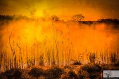 Foggy Lake (Rob Felton) Tags: light sky sun mist reflection tree fog sunrise bedford dawn scenic bedfordshire felton treeline goldenhour sunup cople dogfarm robertfelton gravelworkings bedfordrivervalleypark