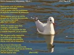 Gaviotas y reflejos (Dan G.M / FF.CC y paisajes) Tags: en rio gaviotas gaviota manzanares gaviotareidora riomanzanares gaviotaenelmanzanares2gaviota