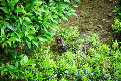 Today's Cat@2016-04-27 (masatsu) Tags: cat pentax catspotting mx1 thebiggestgroupwithonlycats