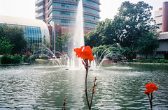 The flower & fountain (iheresss) Tags: flower film fountain 35mm thailand kodak filmcamera ricoh compactcamera negativefilm f32 135film supergold400 ff3afsuper