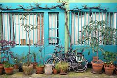 Paris (Yann OG) Tags: paris france color fleur bike french turquoise cité vert bleu pot villa bicyclette arbre français couleur vélo parisian 11e parisien 75011 paris11 courfleurie