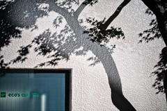 shadows (sinkdd) Tags: shadow japan wall 35mm tokyo nikon shadows f14 sigma japanesemaple d800 nikond800 sinkdd sigma35mmf14dghsm