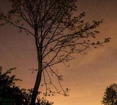 a beautiful night on a field (d.kaehlke) Tags: night canon stars eos nightshot natur tamron tamron2875mmf28 750d
