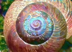SnailDream (Bugldy99) Tags: manipulated manipulation fotomanipulation fotomanipulated photomanipulated photomanipulation surrealism surreal fotosurrealism photosurrealism shell snail animal nature
