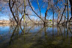 Bayou Chateauguay [Explore] (Elf-8) Tags: sky sun reflection tree river spring flood marsh