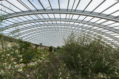 Inside the largest single span greenhouse in the world, National Botanic Garden of Wales, Llanarthne, Carmarthenshire, Wales (Strabanephotos) Tags: world wales garden carmarthenshire greenhouse national single botanic inside span largest llanarthne