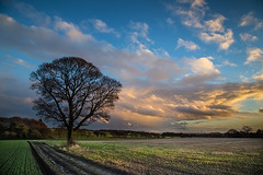 Crank Hill,8th Jan 2016... (Digital Diary........) Tags: tree canon landscape eos fullframe sthelens crank merseyside goodlight billinge canoneos6d crankhill