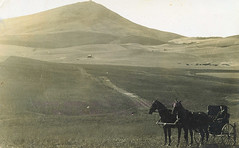 Steptoe Butte, Whitman County, Washington, circa 1910 (Shook Photos) Tags: horses horse pose hotel inn butte postcard wheat farming agriculture buggy horseandbuggy palouse whitmancounty steptoebutte rppc realphotopostcard postscards cashup realphotopostcards jamesdavid wheatthreshing jamessdavis cashupdavis