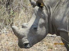 Zimbabwe (213) (Absolute Africa 17/09/2015 Overlanding Tour) Tags: africa2015