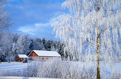 Winter white (Joni Mansikka) Tags: blue trees winter white snow nature woodland suomi finland landscape frost colours outdoor branches shed january birch paimio tamronspaf1750mmf28xrdiiildasphericalif