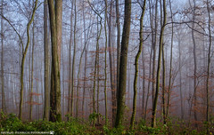 On a cold late November Morning 4. (andreasheinrich) Tags: november trees plants cold misty fog forest germany landscape deutschland nebel pflanzen kalt landschaft wald bäume badenwürttemberg neckarsulm neblig nikond7000