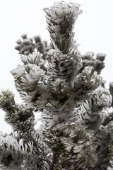 _MG_0996 (schamrock77) Tags: winter italy mountain ice freezing natura inverno montagna friuli ghiaccio galaverna canon6d 35f2is