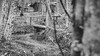 B&W-00716 (alessandro.polla) Tags: bridge blackandwhite bw italy mountains ice nature water river landscape woods iced woodbridge tentino