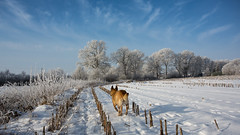 Winter (towytopper) Tags: schnee winter landschaft sonne landleben flickrdiamond huund