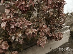 #leaves #trench #leaf #red (Haze0709) Tags: red leaves leaf trench