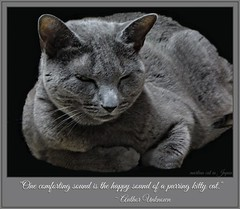 """One comforting sound is the happy sound of a purring kitty cat."" (martian cat) Tags: russianblue onblack kitty kittycat cat pet ©martiancatinjapan allrightsreserved© macro megumi ©allrightsreserved martiancatinjapan© martiancatinjapan diamondclassphotographer collectibles hobbies flickrdiamond ☺allrightsreserved allrightsreserved motivationalposter motivational caption captioncollection ☺martiancatinjapan martiancat creativity"
