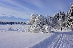 Perfect skiing conditions. (janrs7) Tags: winter sun white snow cold norway norge day skiing bright january bluesky winterwonderland skitrails