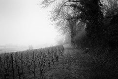 Grosses Moos - explored (m.a.r.c.i) Tags: nature landscape schweiz switzerland vineyard suisse noiretblanc swiss fujifilm monochrom fujinon marci moos ins weinberg murten seeland rebberg murtensee xe1 vully anet grossesmoos xf18mmf2