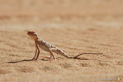 3-Oman-Desert-Marathon-Day-6_0070