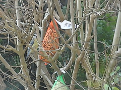 DSC02031 (Enrico Luigi Delponte) Tags: birds sony vogels uccelli sonyfuncamera
