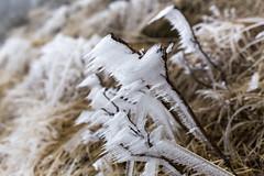 _MG_1038 (schamrock77) Tags: winter italy mountain ice freezing natura inverno montagna friuli ghiaccio galaverna canon6d 35f2is