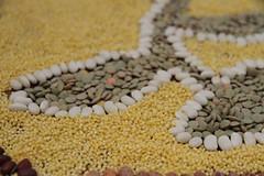 IMG_5427 (640x427) (sproutsprout67) Tags: lentils rangoli cityplot reclaimtheseeds linekeberg