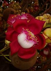 Nice flower (luiz2031) Tags: