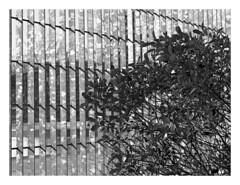 (Gene Daly) Tags: newyorkcity blackwhite canonfd50mmf18 chromenose genedaly olympusem5 p2070170