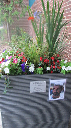 Planted out in Westbourne by BiB in memory of murdered Big Issue Seller Ralph Millward by Chris Colledge