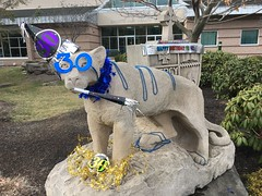 #MUCougarTurns30 (Misericordia University) Tags: birthday basketball mascot 80s archie misericordia mu cougar cougars misericordiauniversity mcgrowl mucougars mubasketball mucougarturns30