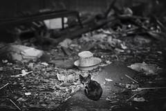 Black Cat Bangkok (siebe ) Tags: street blackandwhite bw black monochrome cat thailand photography blackwhite garbage bangkok streetphotography photojournalism documentary streetlife dirty thai streetphoto waste 2016 pratunam      siebebaardafotografie