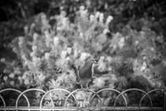 Untitled (agataurbaniak) Tags: leica blackandwhite 50mm brighton cosina monochromatic 11 m monochrom 50 f11 cosinavoigtlander 246 voigtlandernokton voigtlandernokton50mmf11 voigtlandernokton5011 leicamonochrom type246 typ246