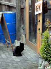 could you let me in...? (matsugoro) Tags: door animal digital pen cat 50mm olympus zuiko epl2